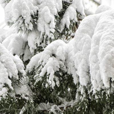 Yılın son günü ve ilk karı